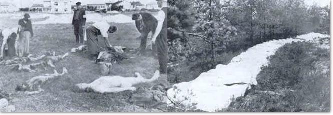 Bodies found at Riga and Dreiliui